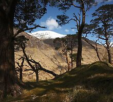 Among the ancient pine trees in Glen Nevis. by John Cameron