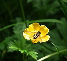 Buttercup Visitor by MyPixx