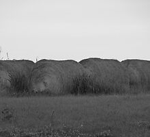 Rollin' In The Hay  by ThinkPics