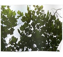 Reflection of Leaves Poster