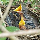 Baby Mockingbirds by ThinkPics