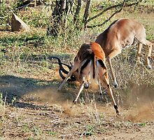 TOLD YOU THIS IS MY SPACE! - Impala interaction - by Magaret Meintjes