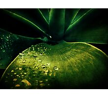 Sitting Water Photographic Print