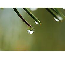 Raindrop on a Pine Needle Photographic Print