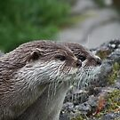 Otter-ly Cute by Coyroy