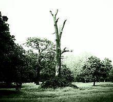 Evil tree by Wintermute69