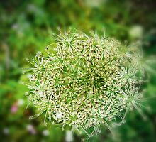 summer umbel by NafetsNuarb