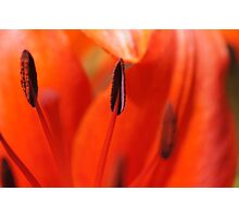 All About Lilies Photographic Print