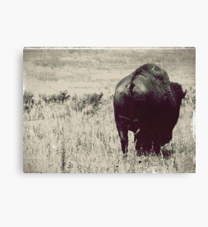 Bison Butt Canvas Print