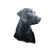 Loyal Labrador by Kaykingston