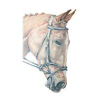 Horse by Kaykingston