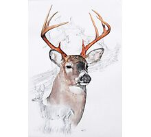 White Tailed Deer Photographic Print