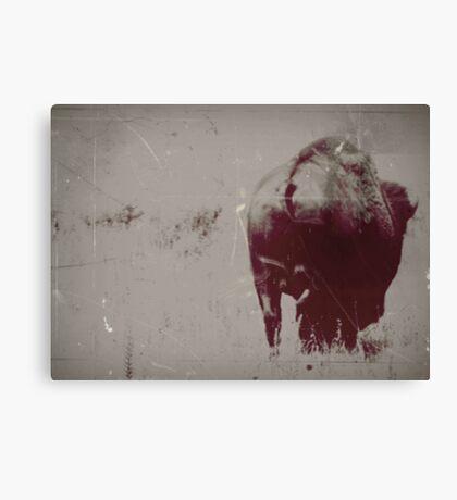 Bison Butt #2 Canvas Print