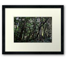 Mt. Tomah - Tarzan's Playground Framed Print