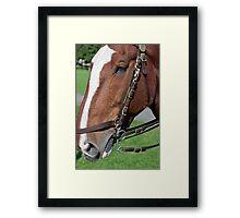 equine envy Framed Print