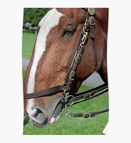 equine envy Poster