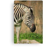 A Zebra's Buffet Line Canvas Print