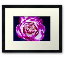 Vibrant Red Rose Framed Print
