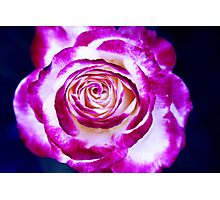 Vibrant Red Rose Photographic Print