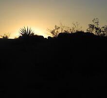 Sunset Desert by CallMeAsinine