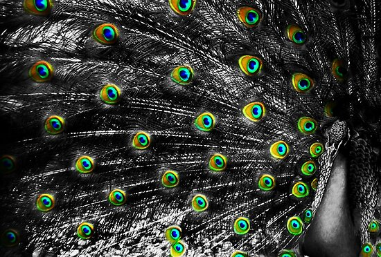 Eyes of A Feather by DionNelson
