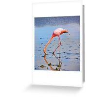 Galapagos Flamingo Greeting Card