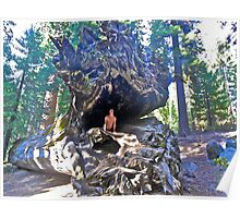 Mystic Cobra in Sequoia N.P. Poster