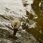 A Baby Swan by CrystalFanning
