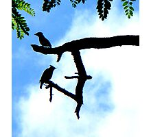 2 Birds Guarding Their Branch Photographic Print