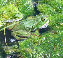 Frog Trying to Hide by CrystalFanning