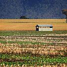 Farmland at Grenfell by Darren Stones