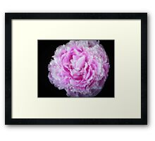 Cotton Candy Kiss Framed Print