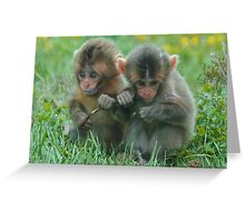 Baby Snow Monkeys Greeting Card
