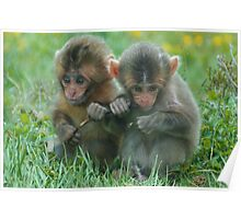 Baby Snow Monkeys Poster