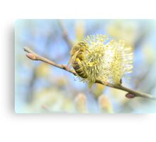 collecting pollen  Canvas Print