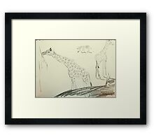 2 giraffes and a zebra Framed Print