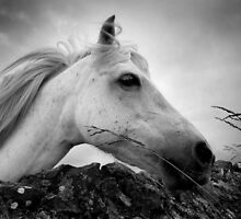 Horse (1-6042) by Raymond Kerr