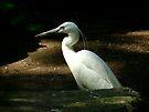 Silver heron by Peter Wiggerman