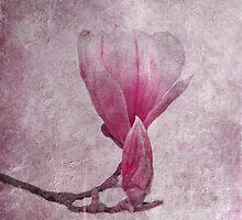 primavera by lucyliu