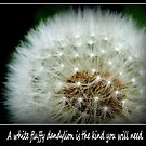 A white fluffy dandylion is the kind you will need. Greeting Card. by lorainek