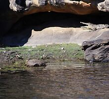 The magic of Arnhem Land - can you see the croc? by georgieboy98