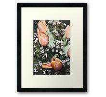 Peach Tulips Framed Print