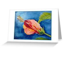 The flowers of hibiscus Greeting Card