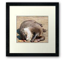 Otters  Framed Print