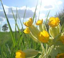 Against her ankles as she trod, The lucky buttercups did nod. by Cebran