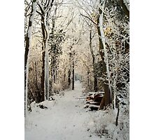 A passage through Narnia. Photographic Print