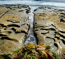 Seaweed by jswolfphoto