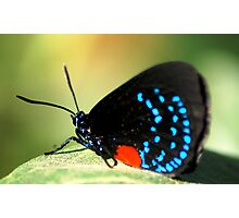 More colorful butterfly Photographic Print