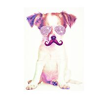Funny Chihuahua purple Mustache and glasses  Photographic Print