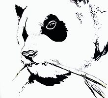 PANDA BEAR by DouceArtifice
